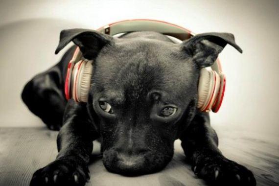 perro-escucha-musica